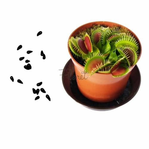 Насіння венериної мухоловки, діонеї