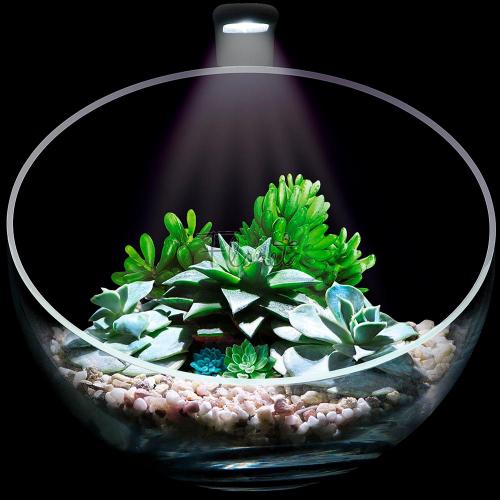 Флорариум Wabi Set
