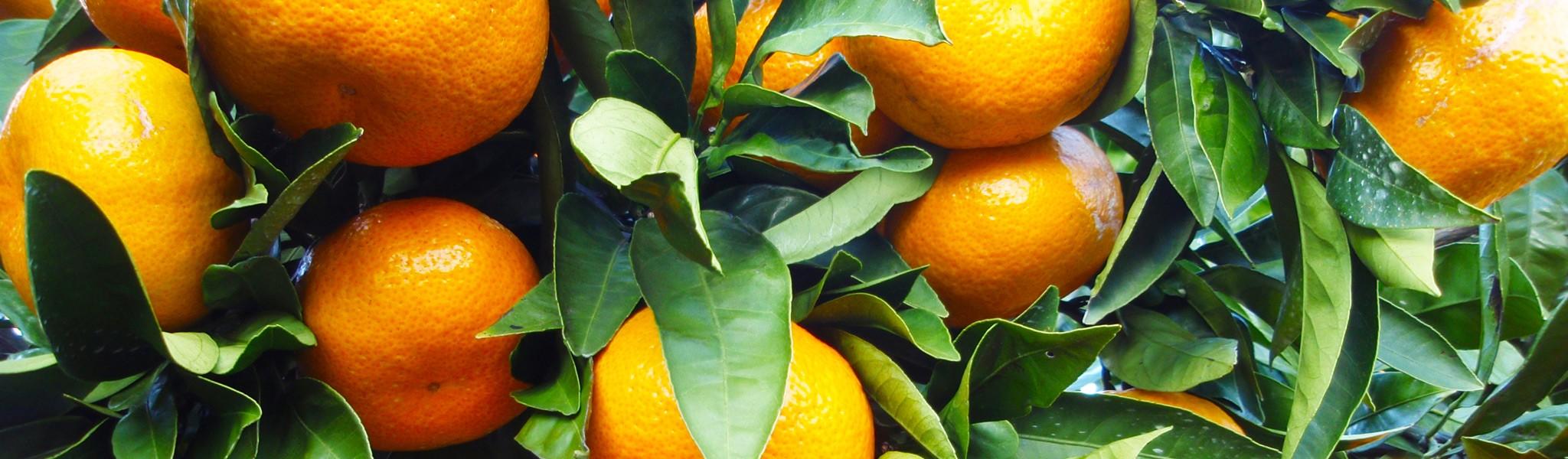 Декоративно-плодовые деревья не только красиво но и полезно