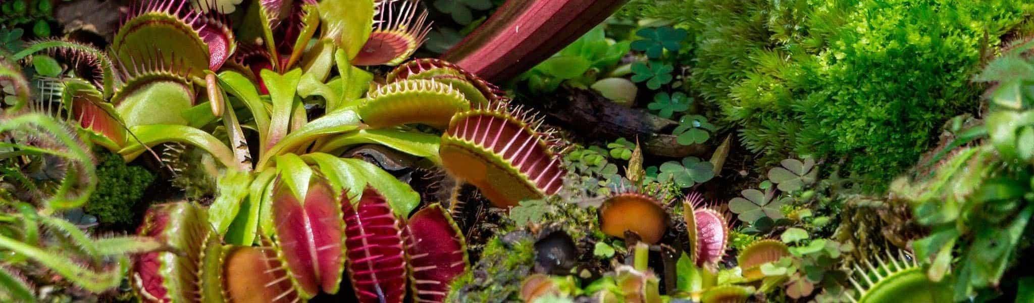 Акція! За покупку трьох хижих рослин знижка 15%!